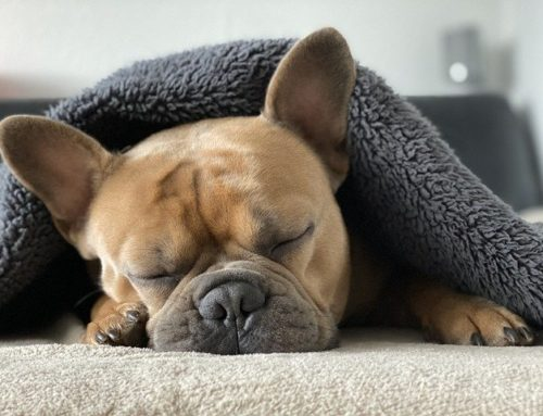 4 ways your patients can improve their sleep